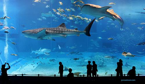 Kuroshio aquarium